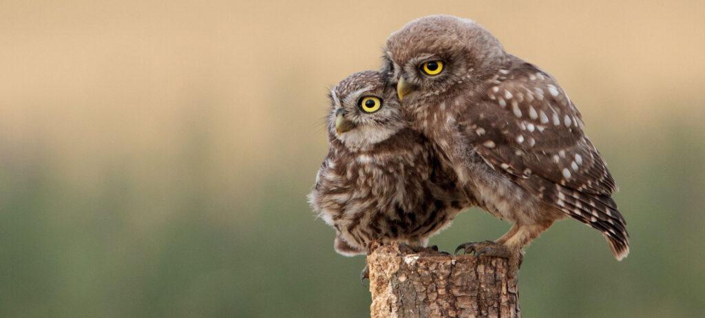 Wat is Birdnesting? Van Diepen Mediation