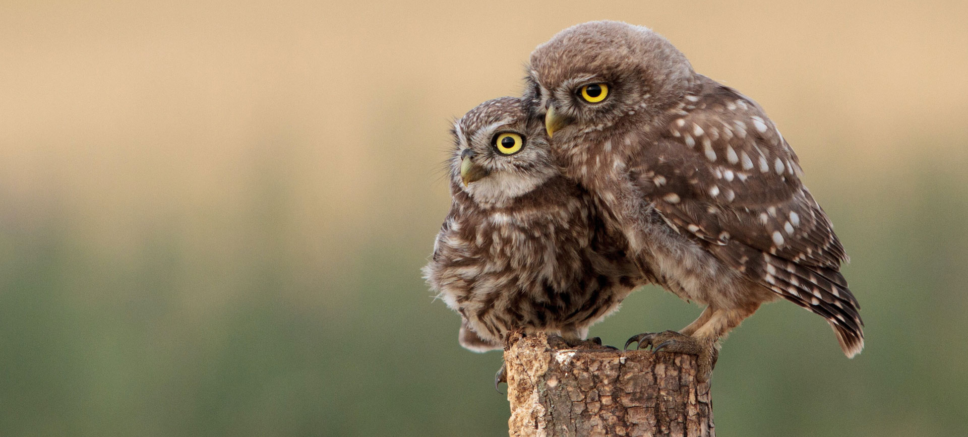 Wat is Birdnesting?